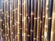 Bamboo wall, Keukenhof Gardens, near Lisse, the Netherlands