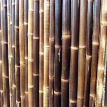 Bamboo wall, Keukenhof Gardens, near Lisse, the Netherlands