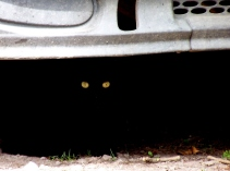 A kitty (I think) hidden in the cool shadows of a derelict car.