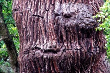 Shades of dark umber highlight a winking grimace in this old tree, near Keswick, England
