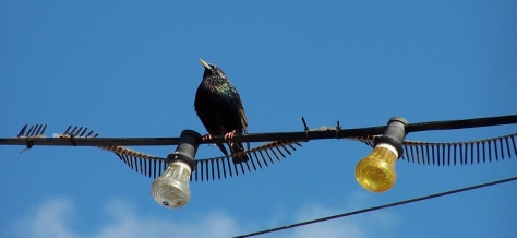 Bird on a wire, high above the streets of Volendam, The Netherlands