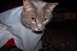 I have no idea how I came to be wearing this plastic bag.