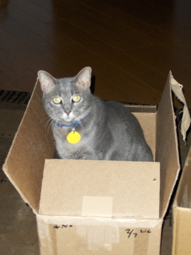 What? You didn't order a kitty from Amazon?