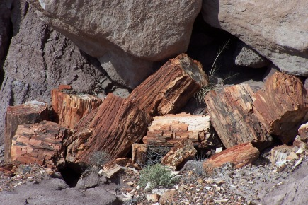 Is it still considered wood? Remnants of 200 million year old trees lie scattered around the Petrified Forest National Park in Arizona.