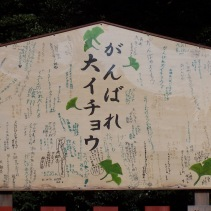 """Ganbare!!"" the Japanese people offer encouragement to the great ginkgo tree."